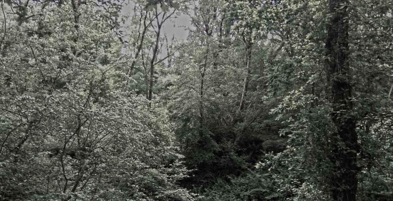 Forestry Management Devon