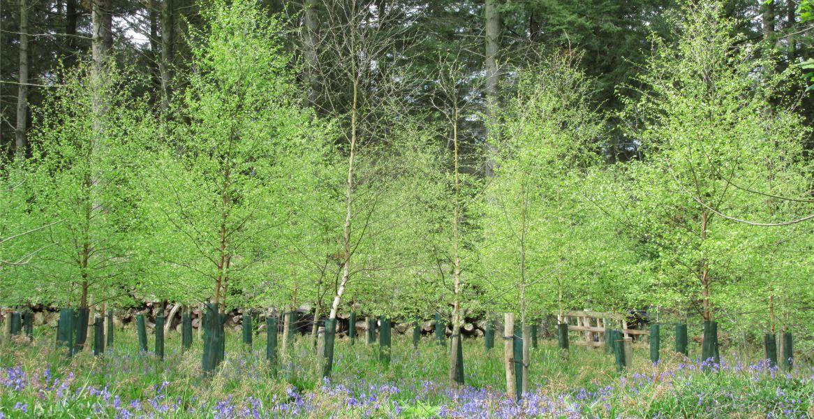 Woodland Sales Devon