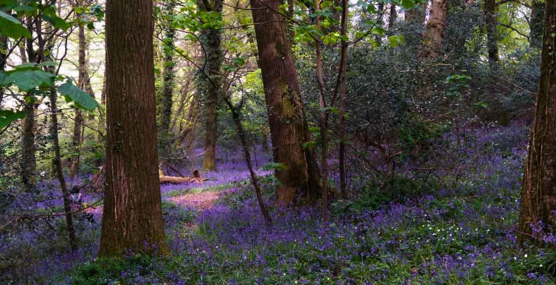 Forestry Consultants Devon