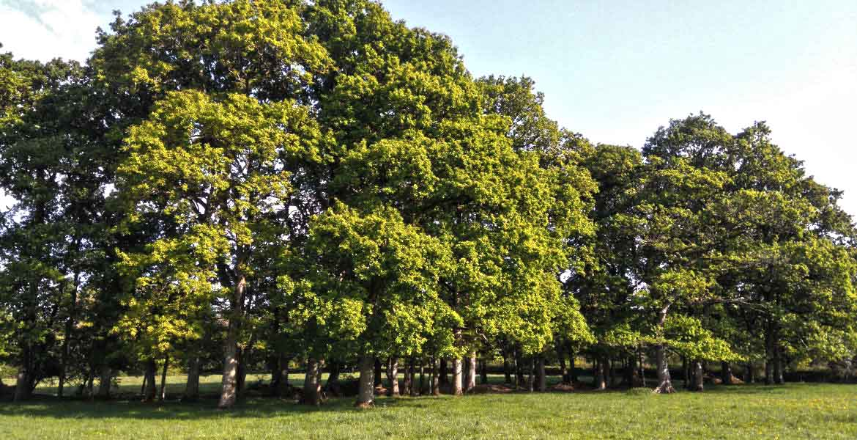 Devon Forestry Consultants