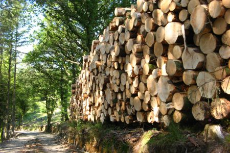 Devon Forestry Management Planing