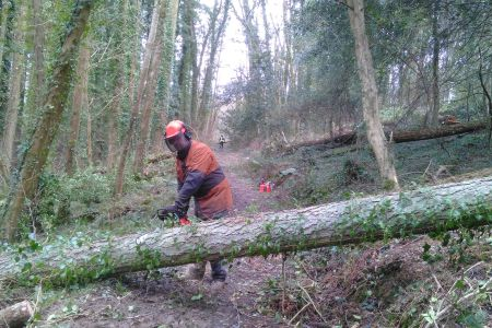 Forestry Consulting and management in Devon