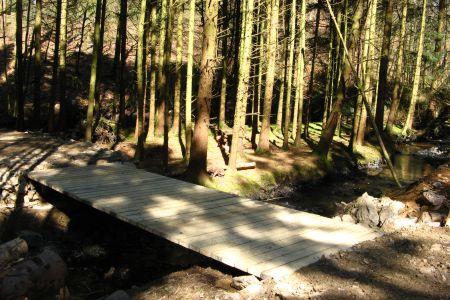Forestry Services Devon
